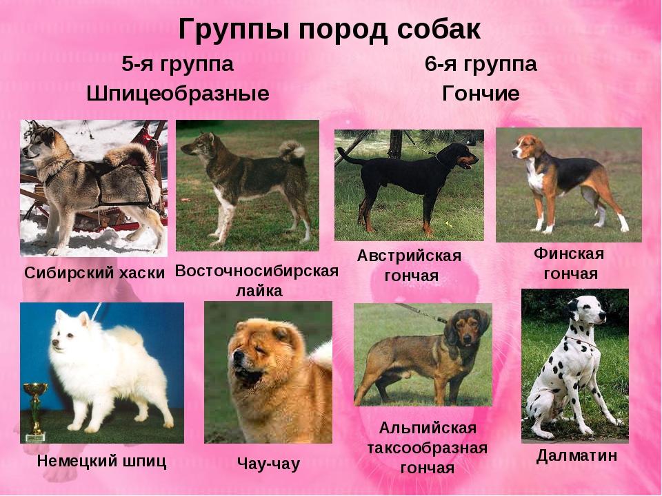 Все виды породы бульдог с фото и описанием