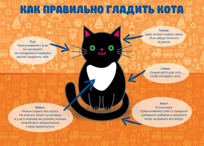Где гладить кошку - как правильно гладить