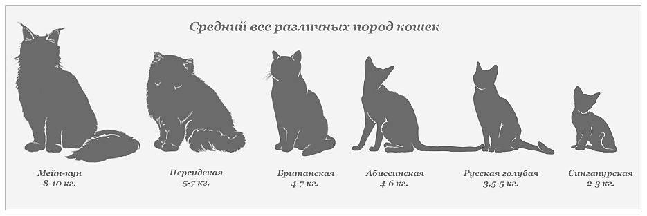 Как определить возраст котёнка – топ-5 способов решить вопрос