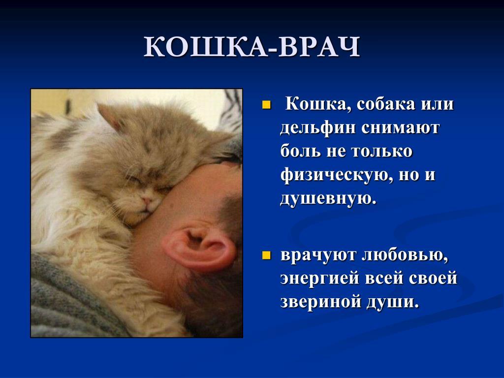 Тайная сила кошек: как они чувствуют болезни человека и пытаются об этом предупредить