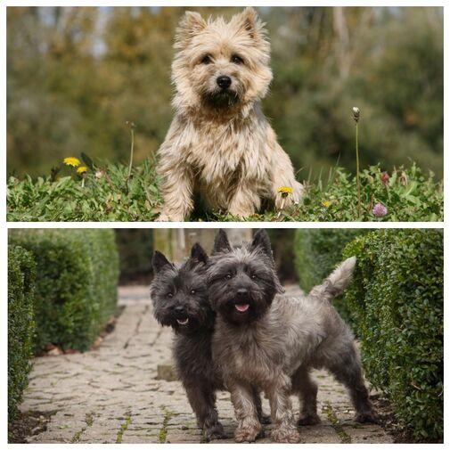Породы собак которые не линяют и не пахнут — название, фото, описание