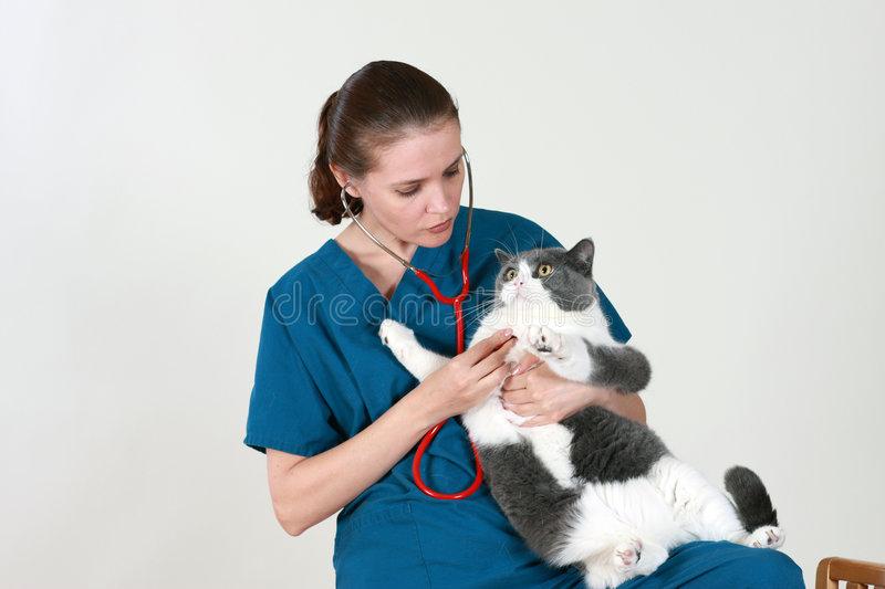 Заболевания органов дыхания у кошек