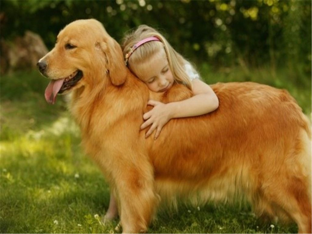 Собаки для детей (72 фото): лучшие породы маленьких и больших собак для квартиры, которые любят детей. как выбрать самую подходящую?