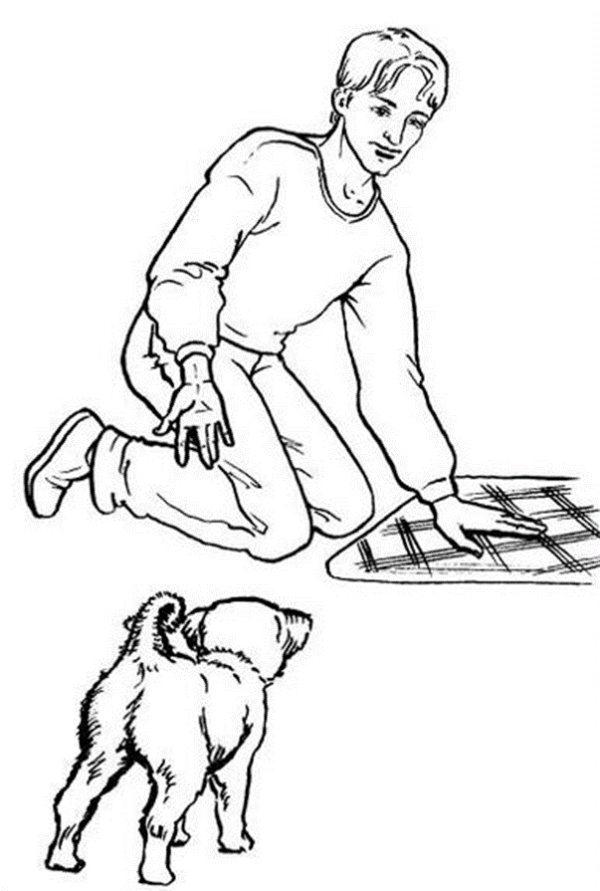 Как научить собаку команде «сидеть»: правила дрессировки, подготовка, выбор поощрения, усложнение навыка
