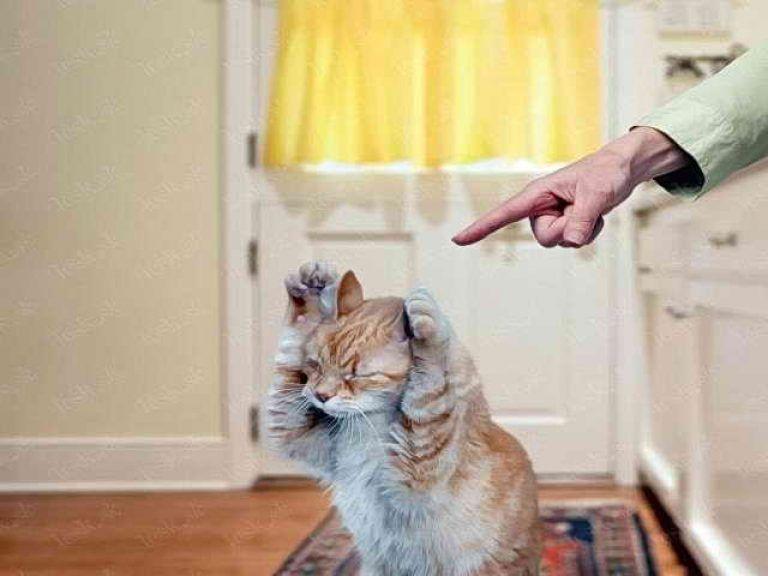 Как наказывать кошку или кота за плохое поведение: действенные приемы и запрещенные методы