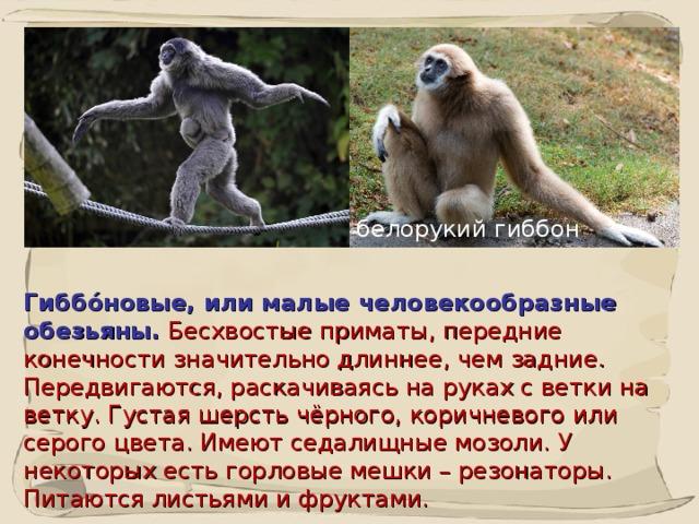 Обезьяна - 79 фото разнообразия социализированных приматов
