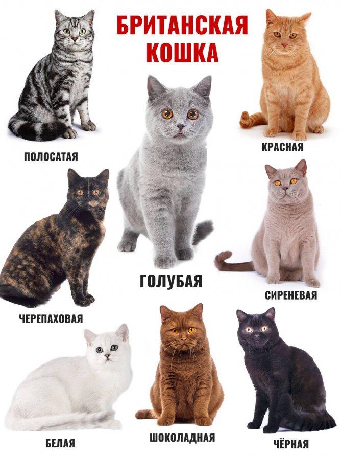 Породы белых кошек, фото и список