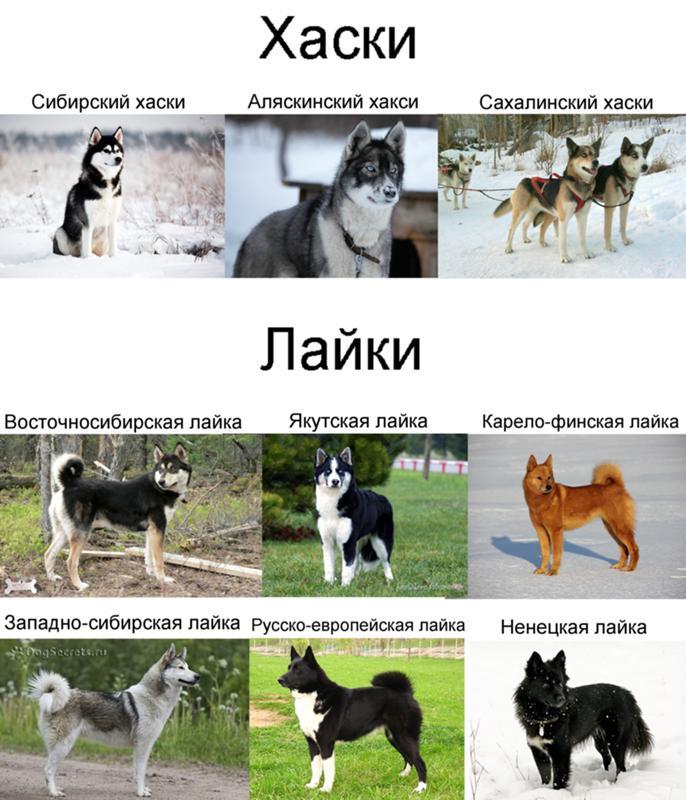 Каникросс: что это такое, породы собак, снаряжение, подготовка