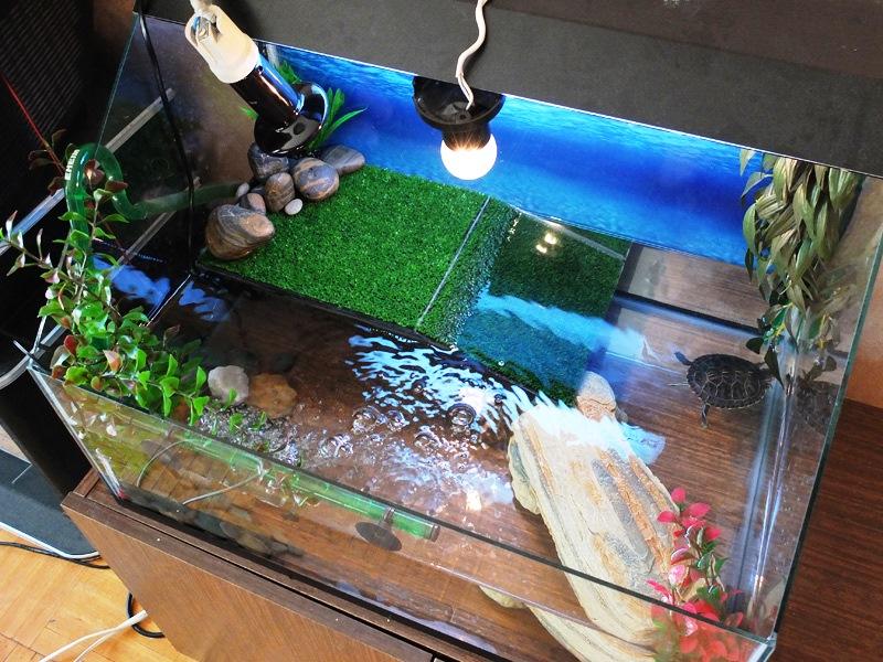 Почему быстро мутнеет вода в аквариуме с красноухими черепахами