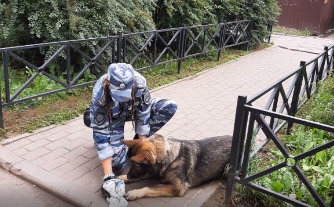 Собаки путина: описание породы, как зовут