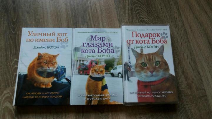 Чем уличный кот отличается от домашнего - gafki.ru