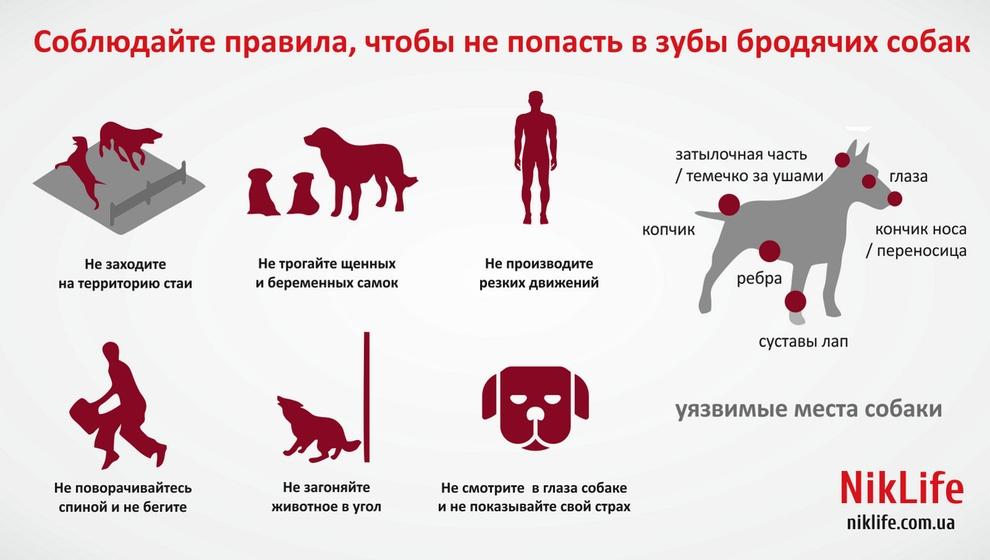 Как убрать бездомных собак с городских улиц - парламентская газета