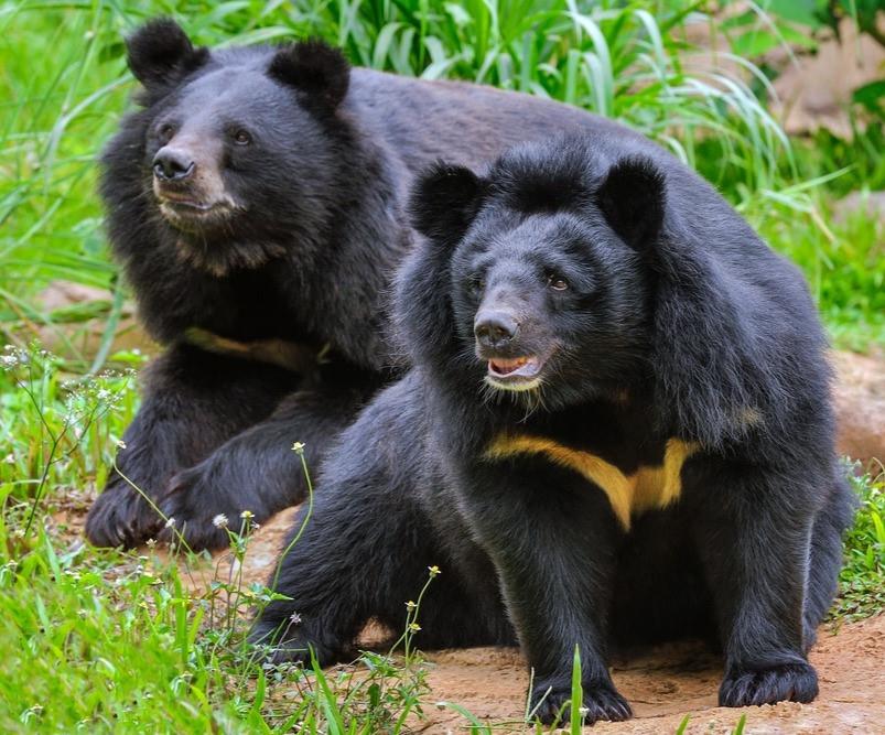 Топ-10 самых красивых медведей в мире (20 фото)   krasota.ru