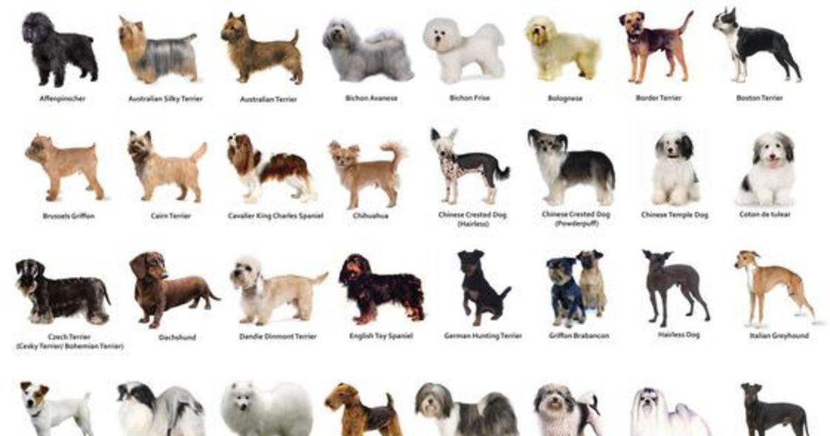 """Почему выпадает шерсть вокруг глаз у собаки: причины и методы лечения   блог ветклиники """"беланта"""""""