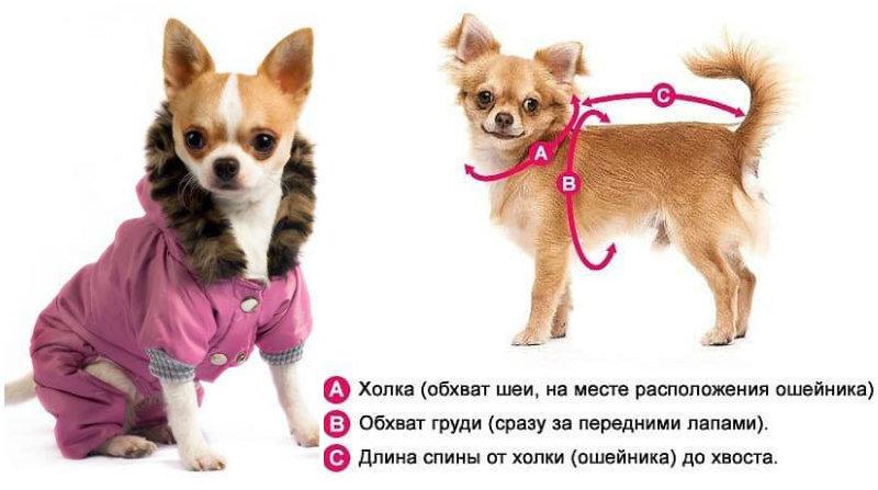 Жилет для собаки: выкройка, советы по пошиву. одежда для собак своими руками