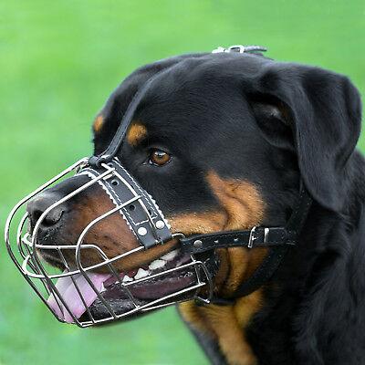 Какие породы собак должны выгуливаться в наморднике, каковы штрафы за его отсутствие