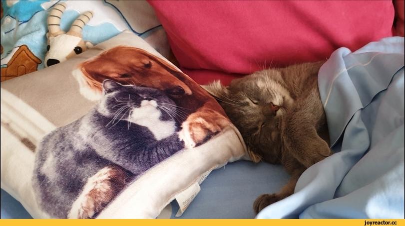 Как уговорить кошку уснуть вместе с вами - статьи