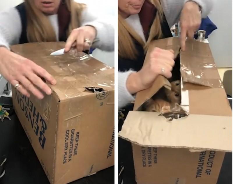 Почему коты любят коробки: 7 основных причин