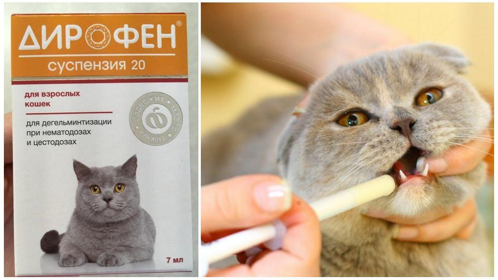Марена красильная для лечения котов и кошек: инструкция по применению у взрослых животных и котят, отзывы