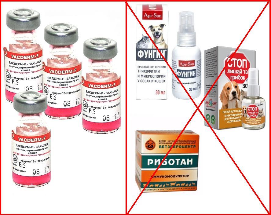Инструкция по применению вакдерм — вакцинация кошек и собак