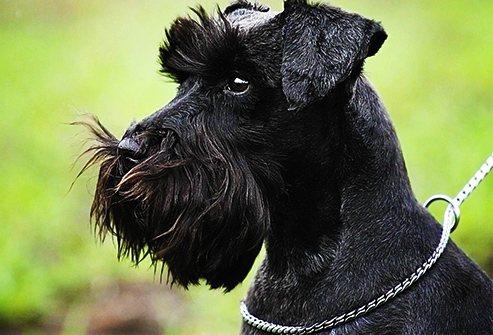 Собаки-долгожители – 5 удивительных фактов из книги рекордов гиннеса