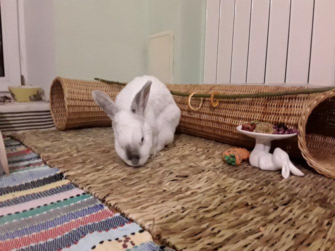 Все, что нужно знать о декоративных кроликах