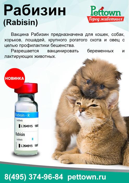 Рабизин вакцина для кошек │ инструкция  по применению рабизина коту