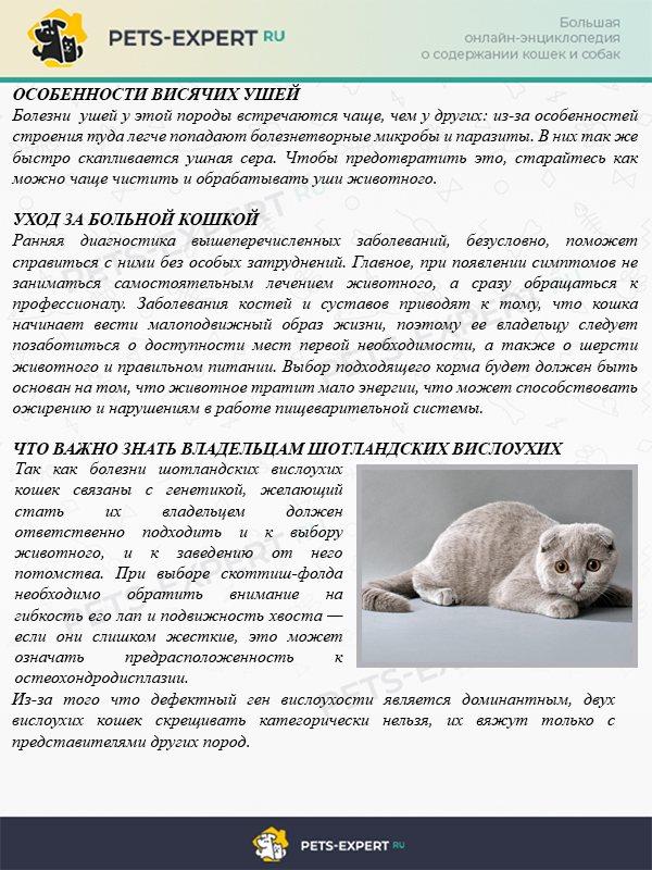Особенности первой вязки кота и кошки