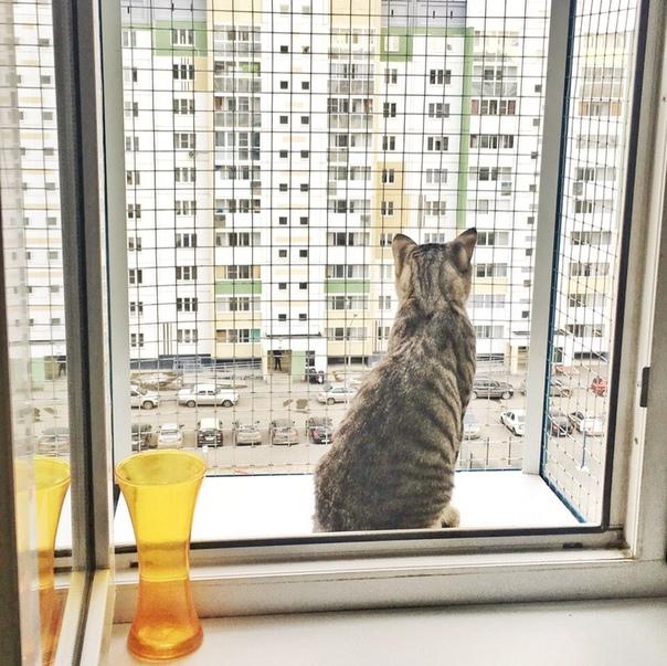 Приметы, поверья и суеверия про кошек со всего света