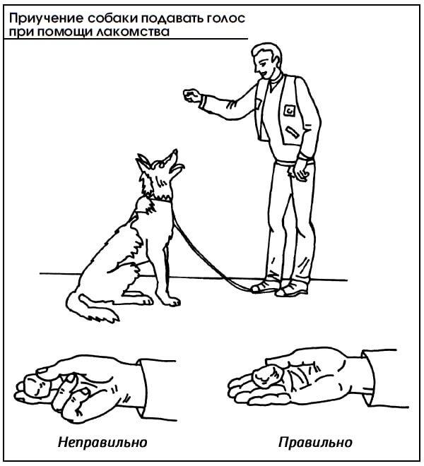 Команда «лежать!»: как научить собаку команде «лежать!», возможные ошибки при обучении