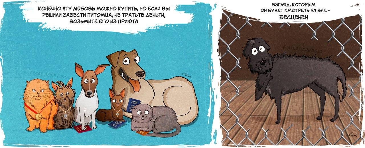 Как социализировать собаку, которую взяли из приюта, как вести себя с ней