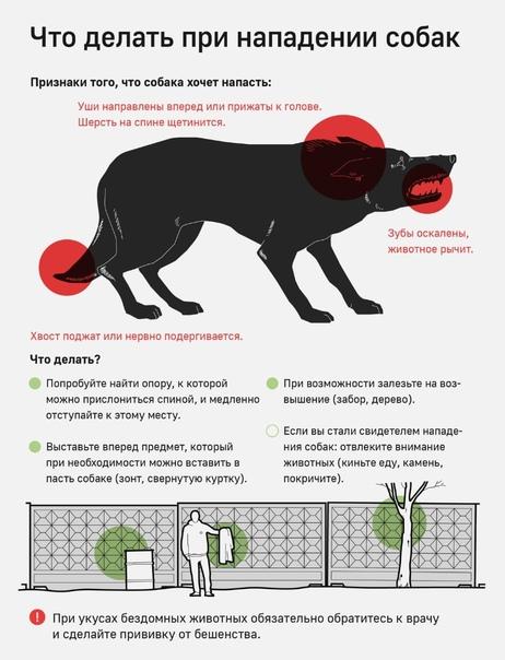Как избавиться от бездомных и злых собак