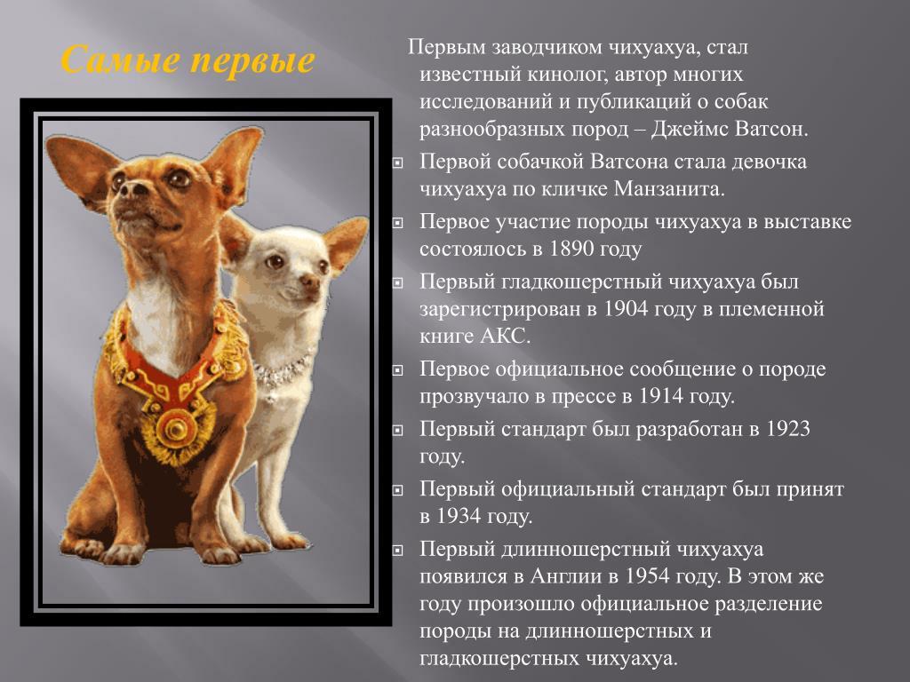 Какую одежду для собаки выбрать в зависимости от породы?