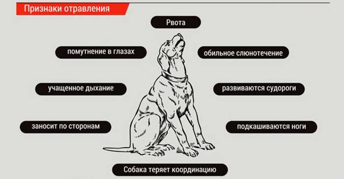 """Можно ли виноград собаке: мнение ветеринаров   блог ветклиники """"беланта"""""""