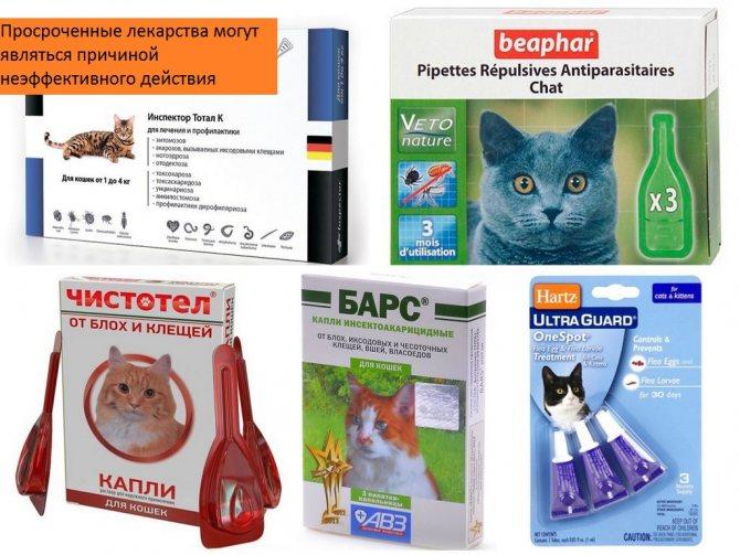 Капли от клещей: инструкция по применению | ветеринарная клиника друзья