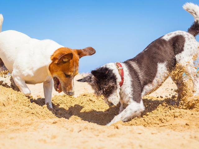 Роет собака ямы во дворе: причины, что делать и как отучить (самые эффективные методы)