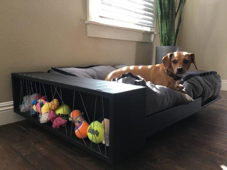 Собака спит на кровати хозяина. польза или вред? мнение ученых.