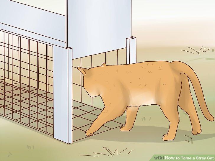 Как поймать любого кота в ловушку?