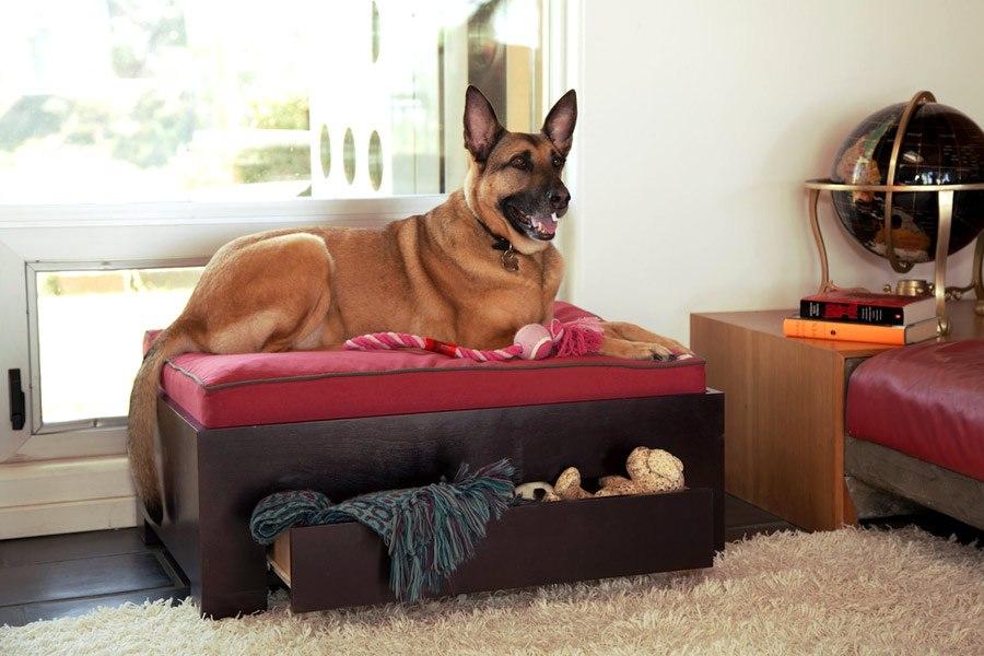 Топ-24 лучших собак для квартиры всех размеров