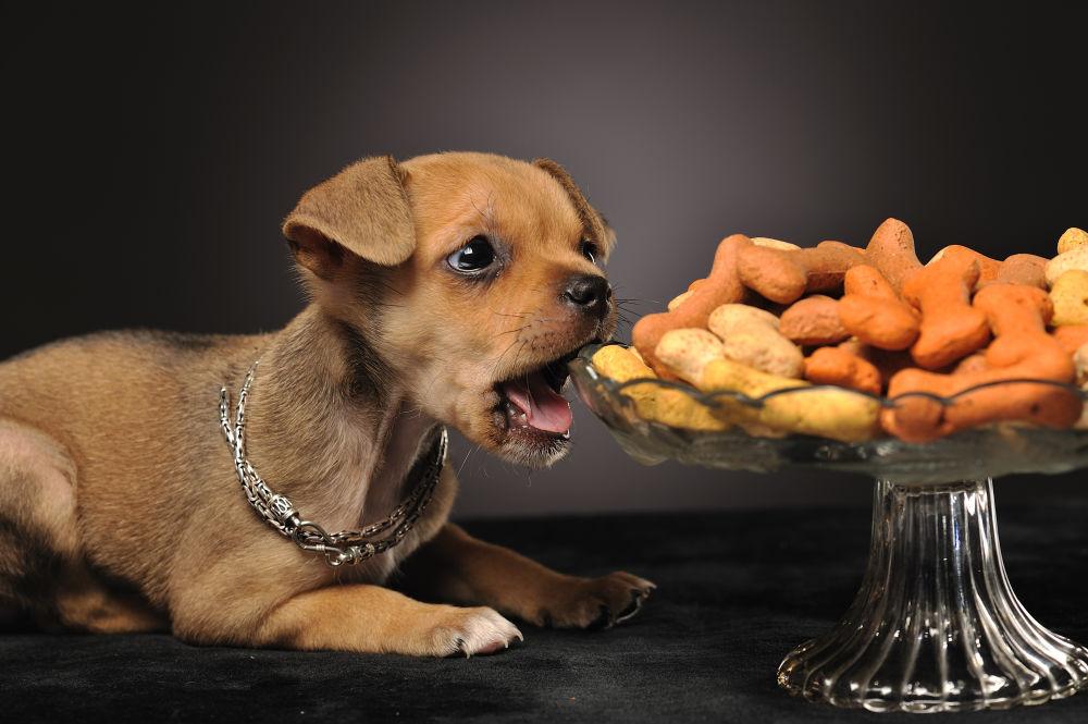 Можно ли давать кошачий корм собаке? что будет, если щенок съел корм для кошек