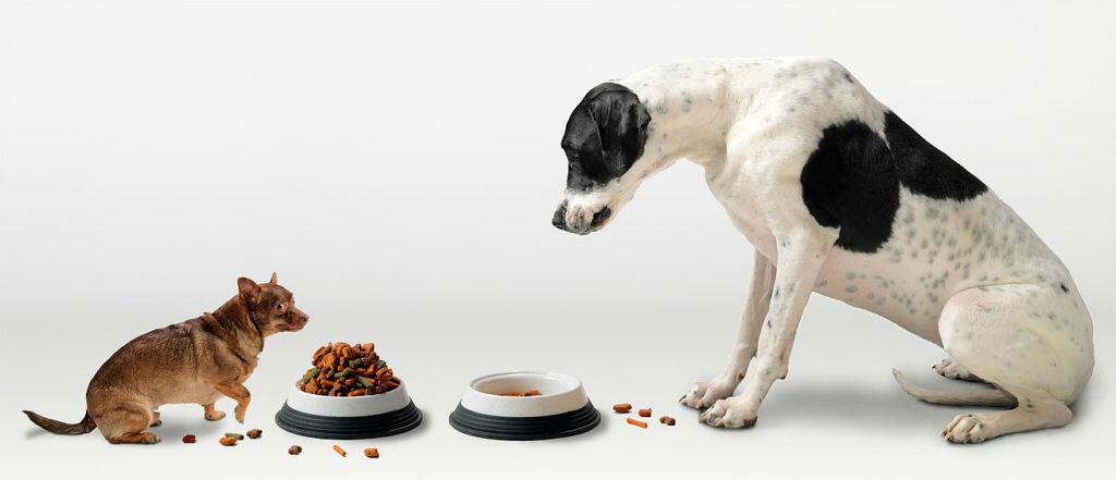 Почему нельзя кормить кошку собачьим кормом: разница в составах и случаи допустимости.
