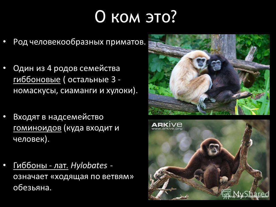 ᐉ виды обезьян - zoopalitra-spb.ru