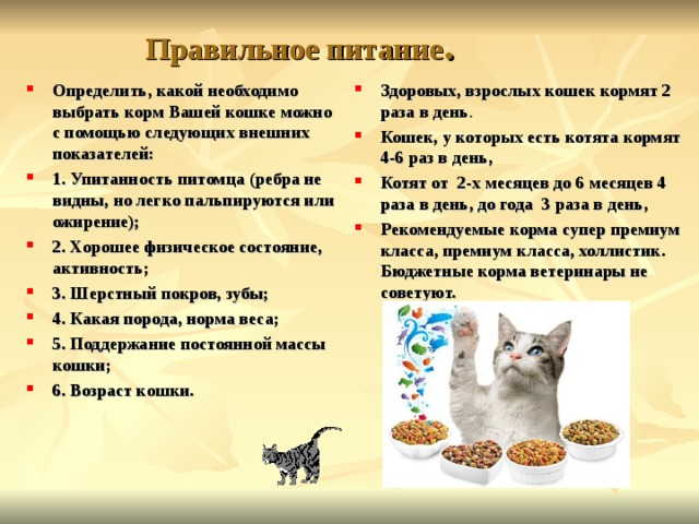 Сколько сухого корма давать кошке?