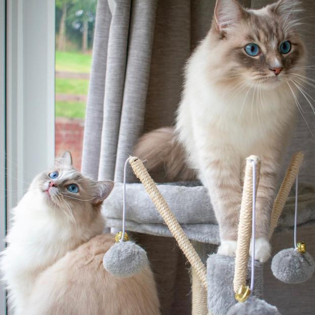 Кто лучше, кот или кошка в квартире: плюсы и минусы питомцев