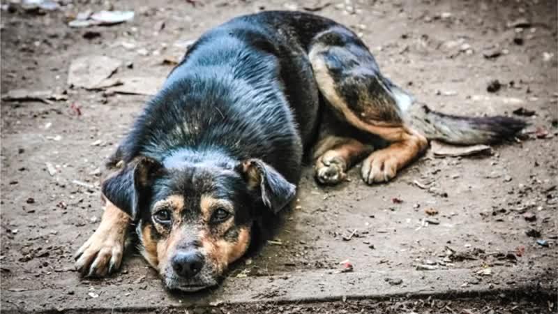 """У собаки глаза текут: возможные причины и что делать   блог ветклиники """"беланта"""""""