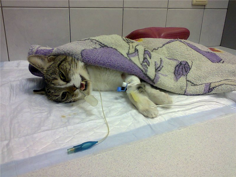 Наркоз для собак, анестезия для собак - ситивет