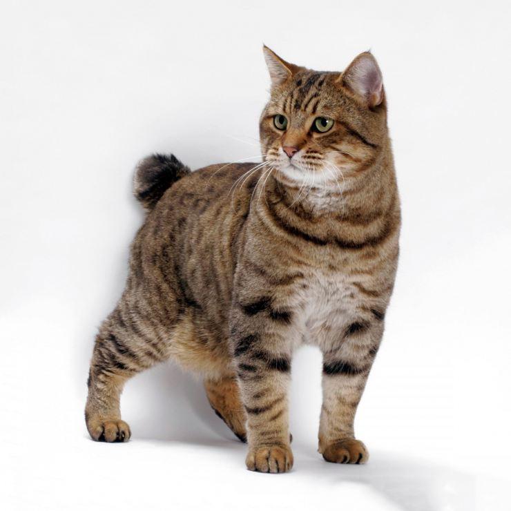 Новые породы кошек с фотографиями и названиями