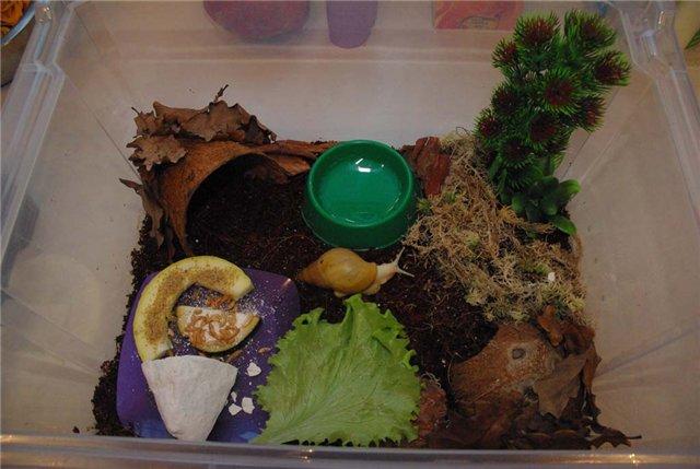 Террариум для улиток ахатин (27 фото): выбор аквариума и контейнера. как обустроить дом и из чего его можно сделать своими руками? вентиляция