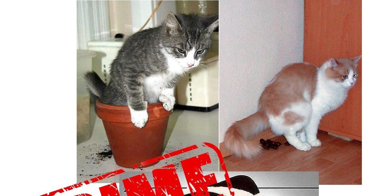 Как отучить кота гадить в неположенном месте: советы специалиста и народные средства