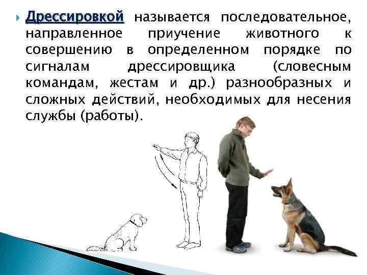 Как приучить собаку команде лежать: назначение и когда можно начинать обучение